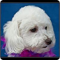 Adopt A Pet :: Molly - Fort Braff, CA