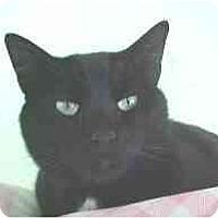 Adopt A Pet :: J.D. - Lunenburg, MA