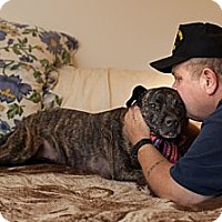 Adopt A Pet :: Pippy - Northfield, NJ