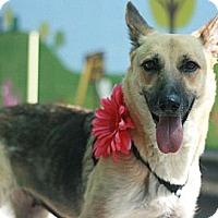Adopt A Pet :: Sarah - Canoga Park, CA