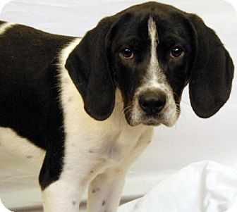 Hound (Unknown Type) Mix Dog for adoption in Newland, North Carolina - Paul