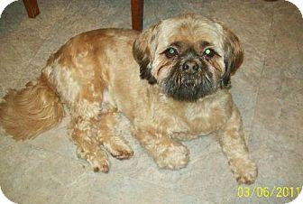 Lhasa Apso Dog for adoption in Buffalo, New York - Bentley