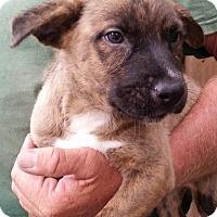 Adopt A Pet :: Eve - Gainesville, FL