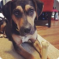 Adopt A Pet :: Cami - Hixson, TN