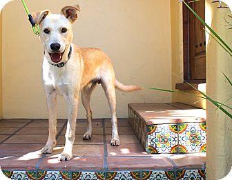 Labrador Retriever Mix Dog for adoption in Los Angeles, California - Lennon