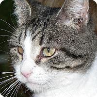 Adopt A Pet :: Sweet Pea - Freehold, NJ