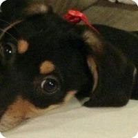 Adopt A Pet :: Jade (in adoption process) - El Cajon, CA