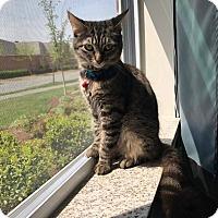 Adopt A Pet :: Charleston - Stafford, VA
