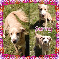 Adopt A Pet :: Sunny is ADOPTED - Buffalo, IN