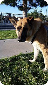 German Shepherd Dog Mix Dog for adoption in Las Vegas, Nevada - Conrad