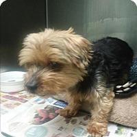 Adopt A Pet :: Almond - Portsmouth, VA