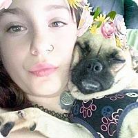 Adopt A Pet :: PUGGY SUE - Toronto, ON
