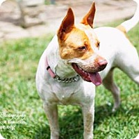 Adopt A Pet :: Aria - Santa Fe, TX