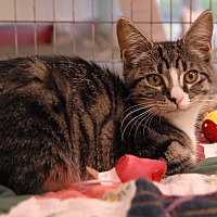 Adopt A Pet :: Pepper - Winchendon, MA