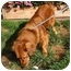 Photo 2 - Golden Retriever Mix Dog for adoption in Berkeley, California - Happy