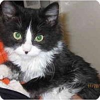 Adopt A Pet :: Perci - Catasauqua, PA
