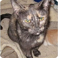 Adopt A Pet :: Spring Momma - Richfield, OH