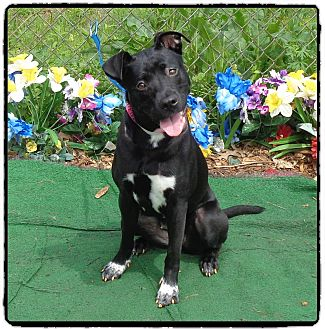 Retriever (Unknown Type) Mix Dog for adoption in Marietta, Georgia - GWALLA
