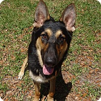 Adopt A Pet :: Duke - Green Cove Springs, FL