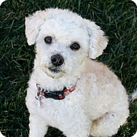 Adopt A Pet :: Tobie (and Katie) - Bellflower, CA