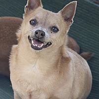 Adopt A Pet :: J. J. - Kempner, TX
