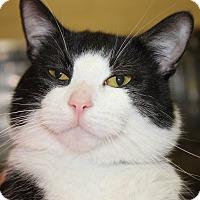 Adopt A Pet :: ROGER - Clayton, NJ
