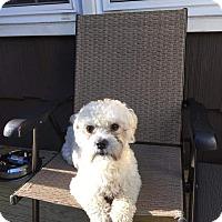 Adopt A Pet :: Cooper - Freeport, NY