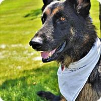Adopt A Pet :: Angus *Miracle Dog* - Gretna, NE