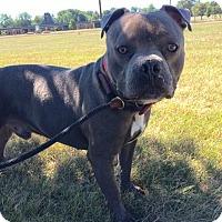 Adopt A Pet :: Cedrick - Jackson, MI
