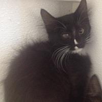 Adopt A Pet :: Roli - Tombstone, AZ