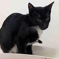 Adopt A Pet :: CARTIER - Fremont, CA