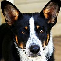 Adopt A Pet :: BAKER (GREAT LITTLE FELLOW) - Wakefield, RI