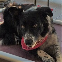 Adopt A Pet :: Shelby - Plymouth, IN