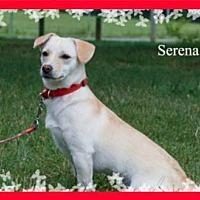Adopt A Pet :: Serena - New Castle, DE