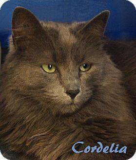 Domestic Mediumhair Cat for adoption in Maple Ridge, British Columbia - Cordelia