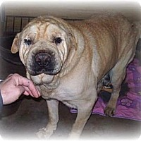 Adopt A Pet :: Lawson - Newport, VT