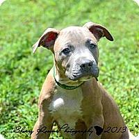 Adopt A Pet :: Jude - Atlanta, GA