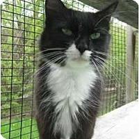 Adopt A Pet :: Violet - Lunenburg, MA