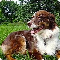 Adopt A Pet :: Buttercup - Washington, IL