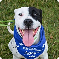 Adopt A Pet :: Patch - Tipp City, OH