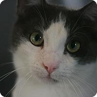 Adopt A Pet :: Cheech - Canoga Park, CA