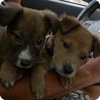 Adopt A Pet :: GEORGIA - CHICAGO, IL