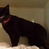 Adopt A Pet :: Darling - Iroquois, IL
