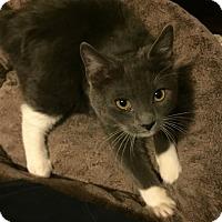 Adopt A Pet :: Timber- Adoption Pending! - Arlington, VA