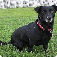 Adopt A Pet :: Savannah - Essex, MD