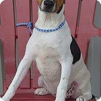 Adopt A Pet :: CADBURY - New Iberia, LA