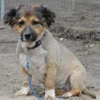 Adopt A Pet :: Fluffy Fonzie - Fresno, CA