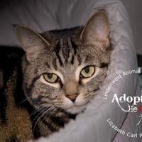 Adopt A Pet :: Zoey - Lindenwold, NJ