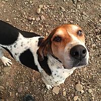 Adopt A Pet :: Frannie - Tioga, PA