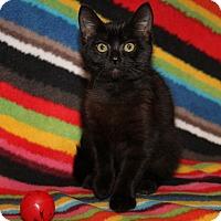 Adopt A Pet :: Princess Noir - Marietta, OH
